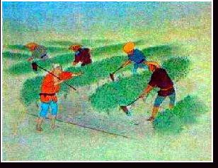 藍畑の根寄せ
